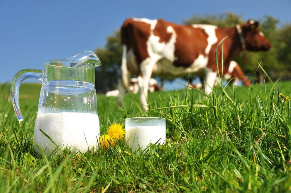 Non-organic cow's milk found to contain toxic chemicals like pesticides and growth hormones