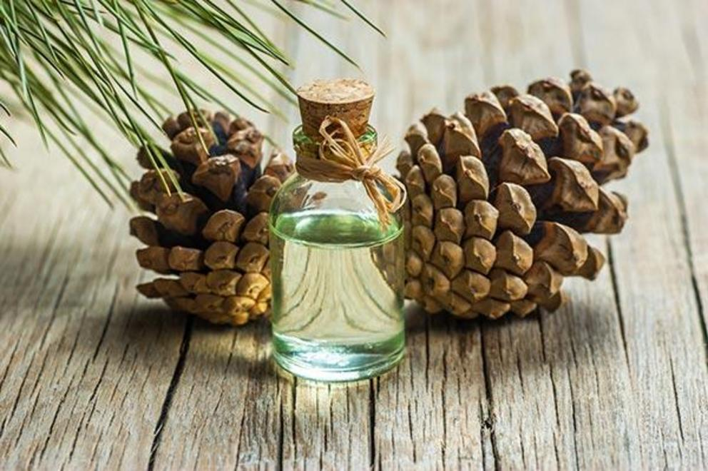 Exploring the chemical composition of essential oils from various Pinus species