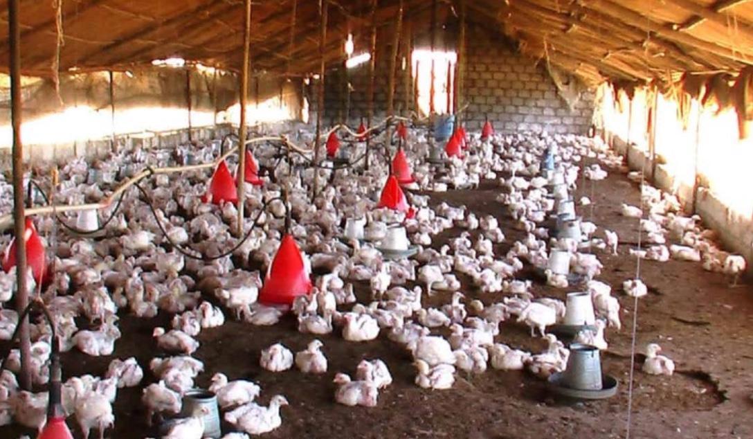 "South Korean Duck Farm Suffers Outbreak Of ""Highly Pathogenic"" H5N8 Bird Flu"