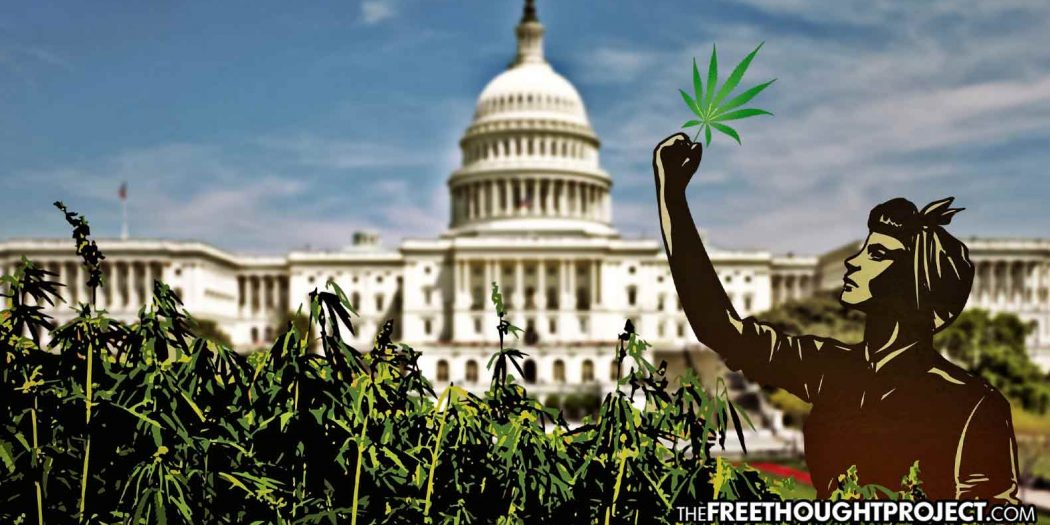 Congress to Cast Vote Next Month That Will Legalize Cannabis Nationwide, Expunge Arrests