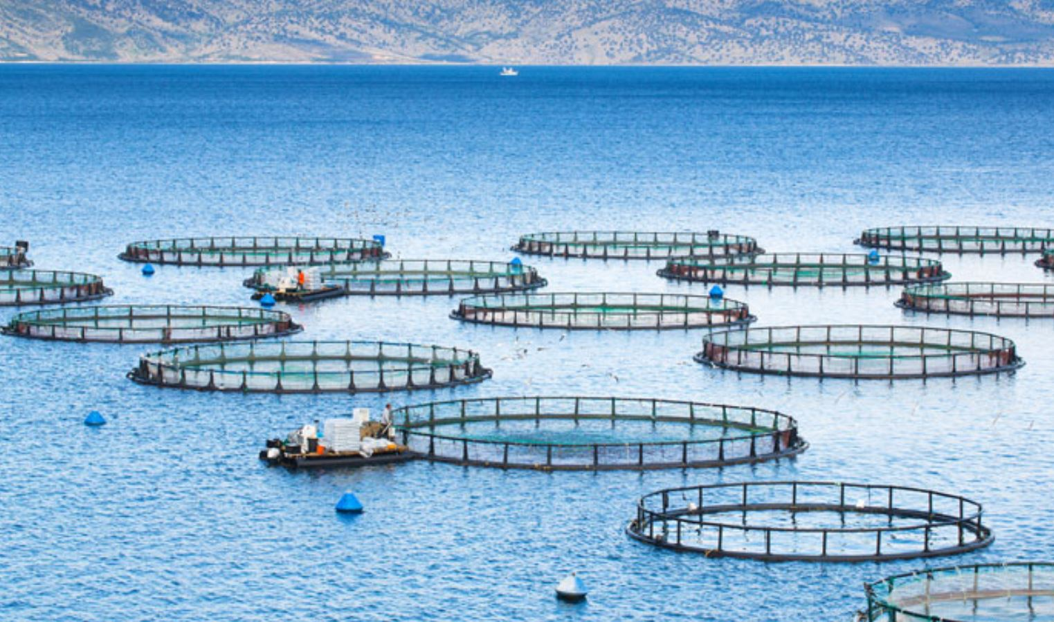 Fish Raised in Industrial Farms – Bad for Humans and the Environment
