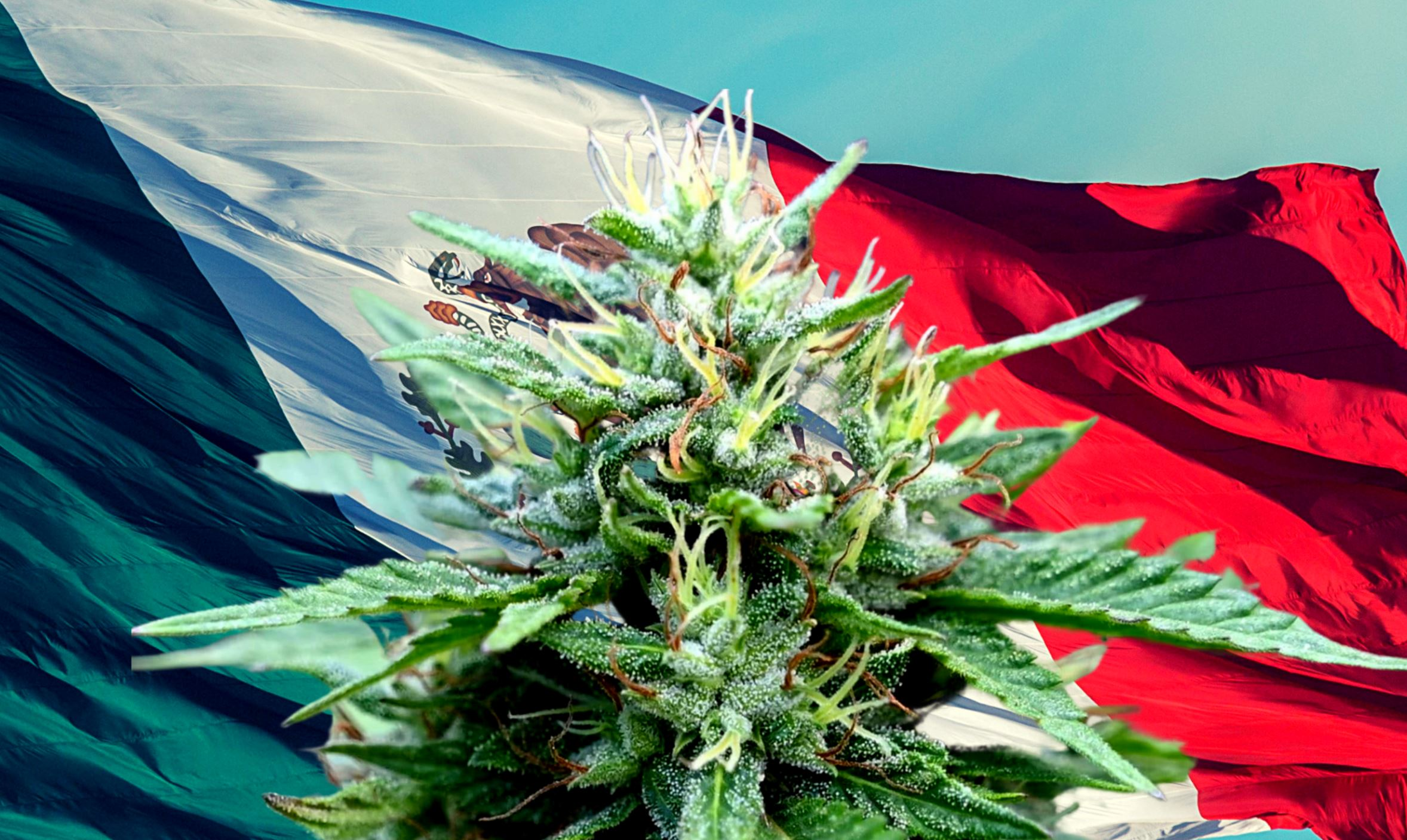 Mexico Senate Votes in Landslide To Legalize World's Largest Cannabis Market
